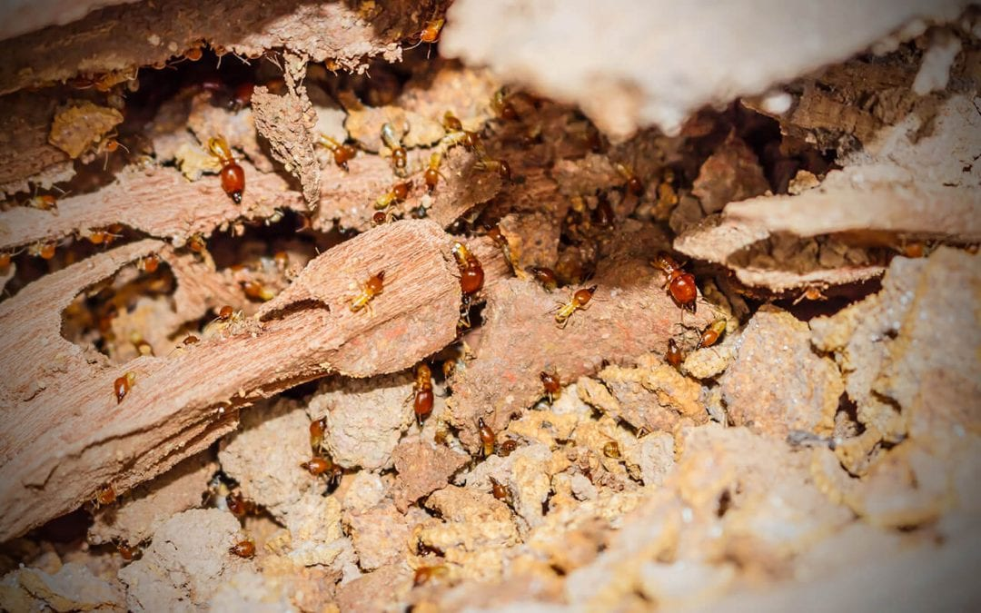 you can prevent termites from destroying the wood in your home