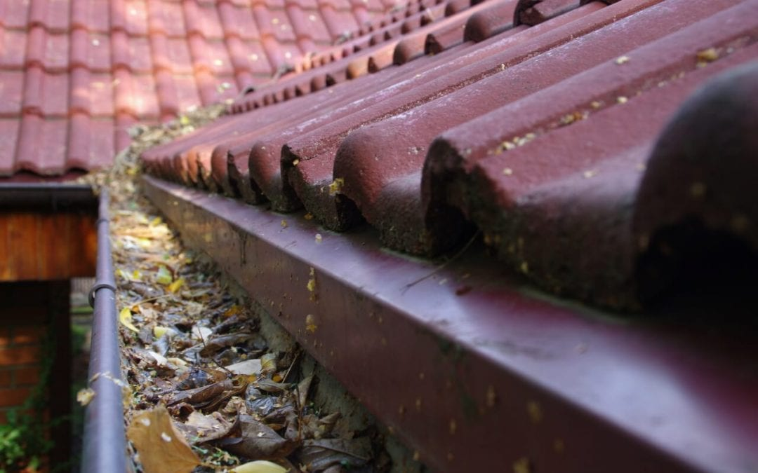clean the gutters to prevent water damage to your home
